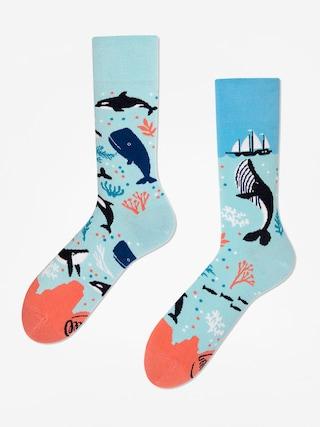 Ponožky Many Mornings Ocean Life (light blue)